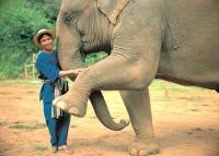 slon-black-ivory
