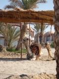 hurgada-egipt