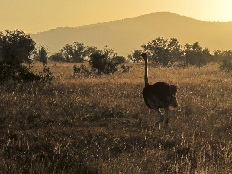 polowanie safari kenia