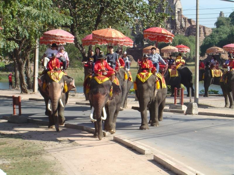 tajlandia slonie
