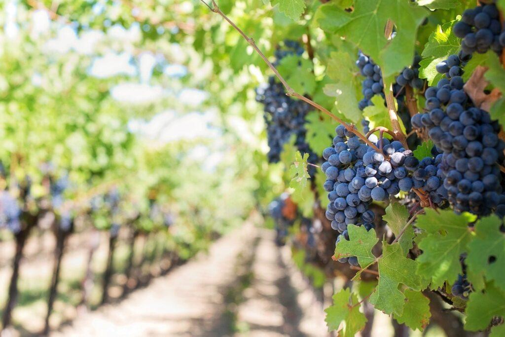 ile produkuje się wina na świecie